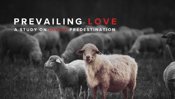 Prevailing Love: Q&A Image